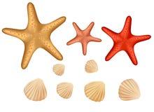 Seashellansammlung getrennt auf weißem Hintergrund lizenzfreie abbildung