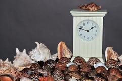 Seashellansammlung mit Borduhr 3 Stockfotografie
