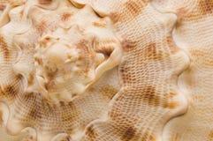 Seashellbeschaffenheit Stockfotos