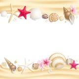 Seashellfeld stock abbildung