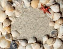 Seashellfeld im Sand Lizenzfreie Stockfotografie