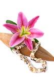 Seashellhalskette und Lilienblume Lizenzfreies Stockfoto