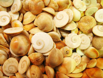 Seashellhintergrund Stockbild