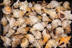 Seashells à vendre. Image stock