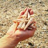 Seashells в руке стоковые фотографии rf