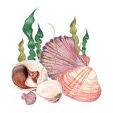 Seashells акварели нежные Стоковое Фото