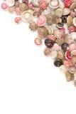 Seashells, белая предпосылка Стоковое Фото