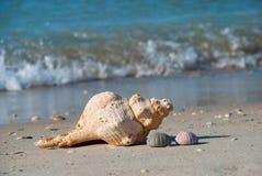 Seashells брошенные из моря на береге, Мексиканского залива, США стоковые фото