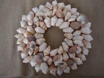 Seashells выровнянные в круге стоковая фотография
