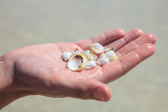 Seashells в ладони Стоковое фото RF