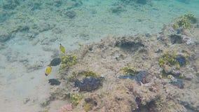 Seashells в голубом море сток-видео