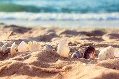 Seashells в песке стоковая фотография