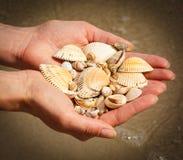 Seashells в руке женщины на пляже морем Стоковые Изображения