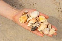 Seashells в руке женщины на пляже Стоковая Фотография RF
