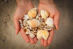 Seashells в руке женщины на пляже Стоковые Изображения RF