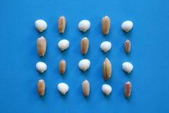 Seashells в строках на голубой предпосылке Стоковая Фотография