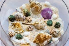 Seashells в шаре Стоковое Изображение RF