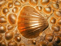 Seashells золота Стоковое фото RF