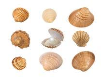 Seashells изолированные на белой предпосылке Стоковое фото RF