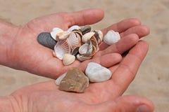 Seashells и камни в мужских руках на предпосылке моря и песка, seashore океана, конца-вверх, космоса экземпляра стоковая фотография rf
