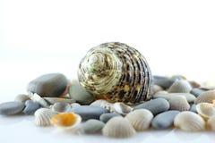 Seashells и камни моря Стоковое Фото
