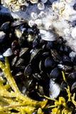 Seashells и морская водоросль в мелководье сверху Наяды моря на приморье белого моря во время отлива r стоковое изображение