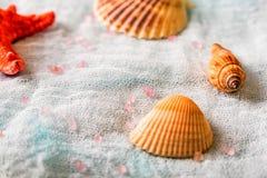 Seashells и морские звёзды на белой предпосылке ткани стоковые фотографии rf