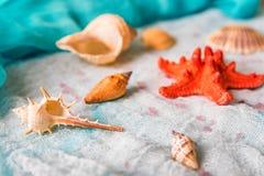 Seashells и морские звёзды на белой предпосылке ткани стоковые фото