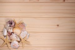 Seashells и морские звёзды на деревянной предпосылке Стоковые Изображения