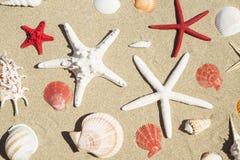 Seashells и морские звёзды стоковое фото
