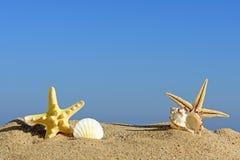 Seashells и морские звёзды на песке пляжа Стоковая Фотография RF