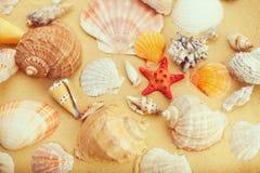 Seashells и морские звёзды на песке Стоковое Фото