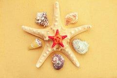 Seashells и морские звёзды на песке Стоковое фото RF