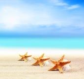 Seashells и морские звёзды на песчаном пляже Стоковая Фотография