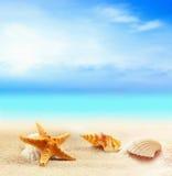Seashells и морские звёзды на песчаном пляже Стоковое Изображение