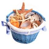 Seashells и морские звёзды Стоковая Фотография