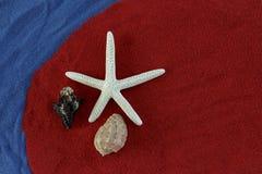 Seashells и морские звёзды Стоковые Фотографии RF