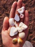 seashells и отполированные части гончарни над ладонью на предпосылке глины стоковое изображение