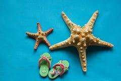 2 seashells и шаг-ins на голубой предпосылке Стоковые Изображения