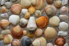 Seashells как предпосылка, море обстреливают собрание естественное стоковая фотография