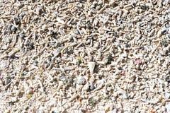seashells кораллов предпосылки Стоковое Изображение