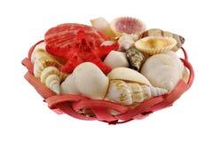 seashells красного цвета шпаргалки состава Стоковая Фотография