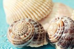 Seashells на голубой предпосылке Стоковое Фото