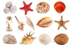 Seashells, морские звёзды, камешки, и кокос на белой предпосылке Изолированные предметы стоковое фото rf