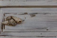 3 seashells над белой деревенской предпосылкой стоковые фото
