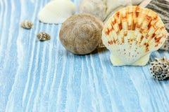 Seashells на деревянной досках покрашенных синью holid лета предпосылки Стоковая Фотография RF