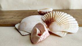 Seashells на деревянной предпосылке стоковая фотография rf