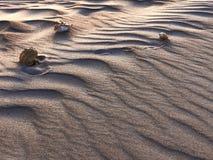 Seashells на дюнах Стоковые Изображения RF