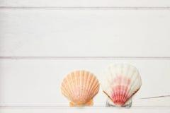 2 seashells на деревянной поверхности Стоковое Изображение