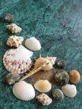 Seashells на изумрудной каменной предпосылке стоковая фотография rf